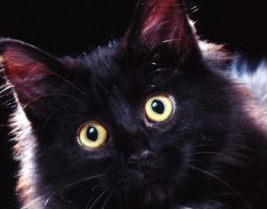 Котка успокоява плачещо бебе като изпечена бавачка (видео)