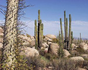 Kак са разпределени растителността и пустините на Земята (видео)