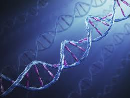 Физическите упражнения  променят ДНК