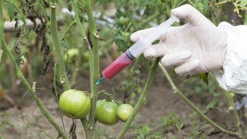 Китай и Русия забраниха генно модифицирани храни. Вижте защо