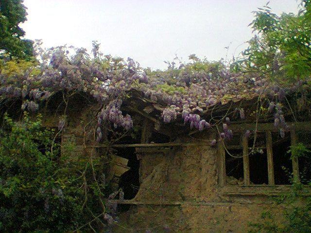 Когато една глициния нападне празна къща…
