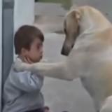 Това видео разплаква 99 на сто от зрителите