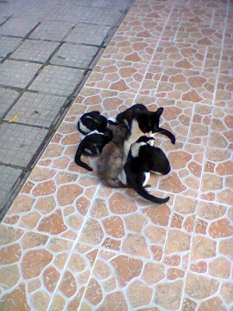 Безграничната любов на мама Котарачка (снимки)