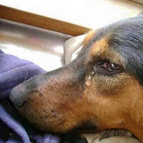 Закон в Нова Зеландия обяви: Животните са разумни същества