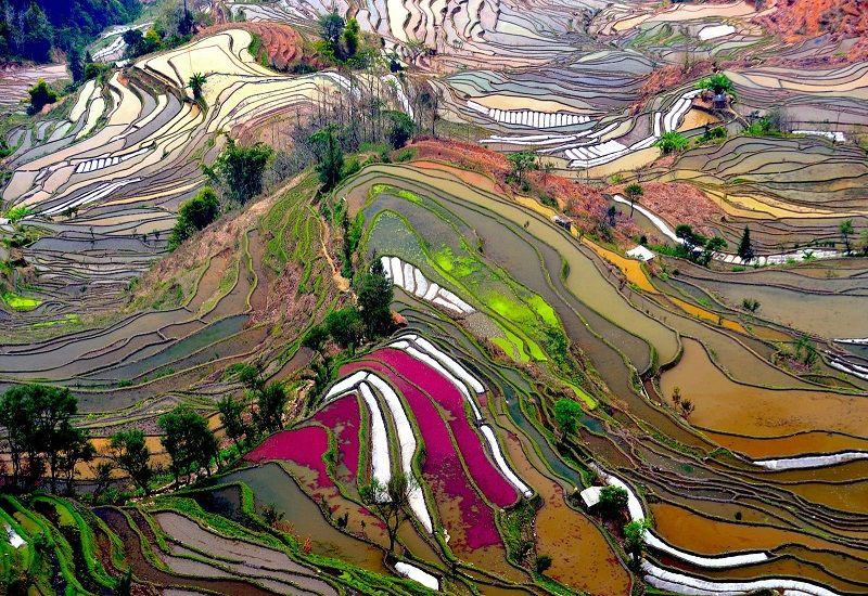 Вероятно Бог е подсказал на китайците да направят тези изумителни тераси (снимки)