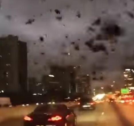 Огромно ято черни птици изплаши хората от Хюстън – САЩ (видео)