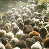 Който безмозъчно върви след стадото вижда само задници