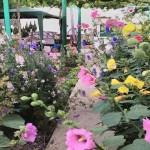 Самоуките частни паркове и цветни тротоари в Ново село (снимки)