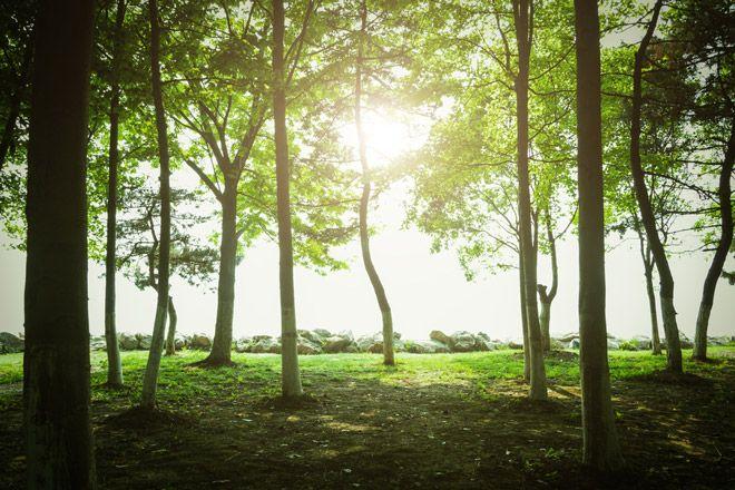 Удивително: Растенията са се научили да поглъщат повече парникови газове