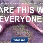 Потресаващо: Фармацевтични компании точат кръв от бременни кобили до смърт, продават хормоните на свиневъди! (видео)