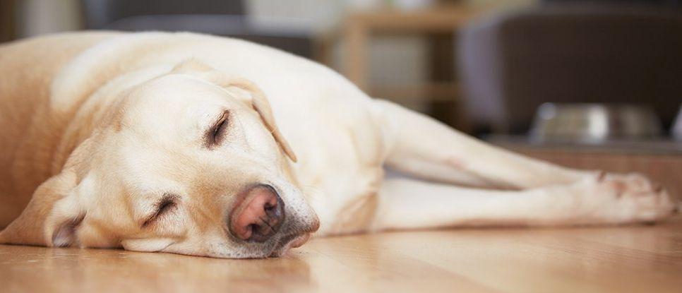 Защо чувстваме постоянна умора дори след добър сън?