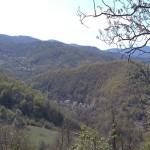 Изненада: Глобалното затопляне влияе положително върху прираста на дърветата