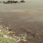 Водата край брега на Черно море стана червена (видео)