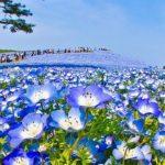 Хитачи парк – Япония, да онемееш от красота! (снимки, видео)