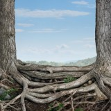 Дърветата имат чувства, сприятеляват се, грижат се едно за друго (видео)